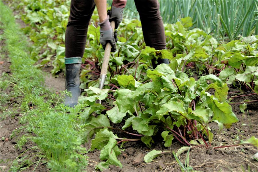 Ūkininkai siūlo ugdyti darbinius įgūdžius.  Gedimino Nemunaičio nuotr.