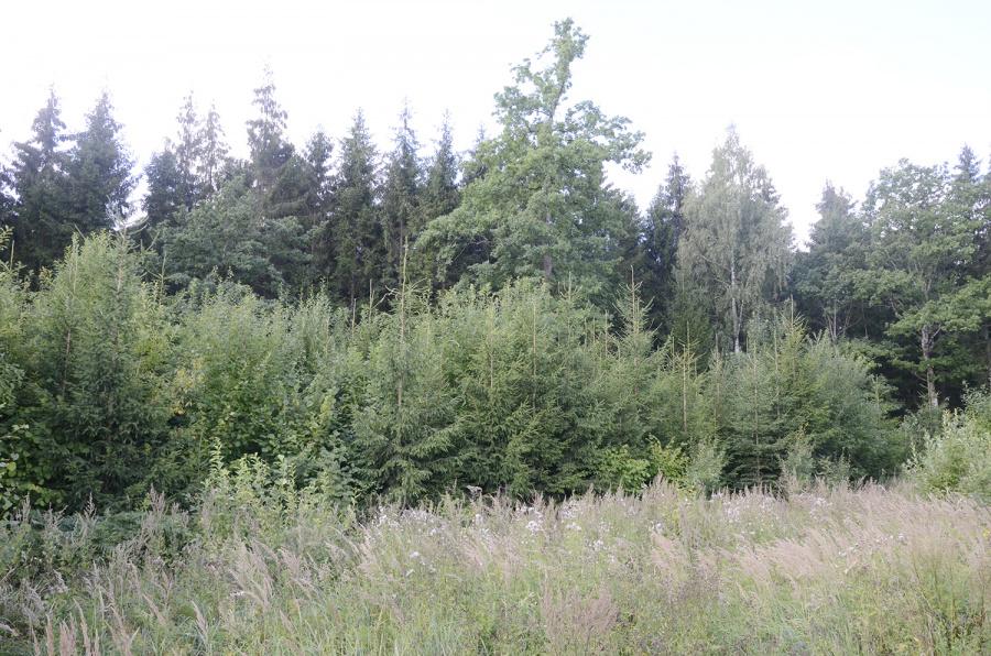 Paramos jaunuolynams ugdyti ir miškų aplinkai gerinti gali kreiptis privačių ir valstybinių miškų valdytojai, įgyvendinantys projektus kaimo vietovėse.  Ritos Nagienės nuotr.